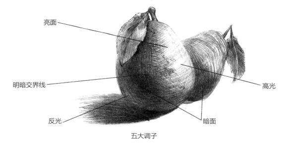 素描绘画的表现方式:五大调子