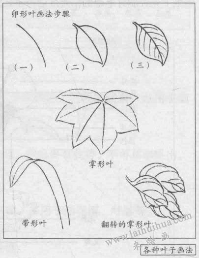 花卉白描画法的基本结构:卵形叶画法步骤