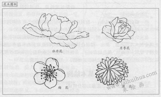 花卉白描画法的基本结构:花头图例