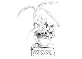水仙花素描画法
