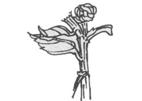 菊花花杆白描画法