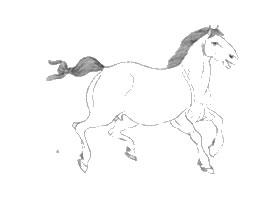 马的白描作品图片