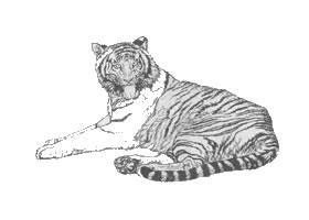 老虎白描作品图片