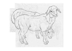 羊的白描作品图片