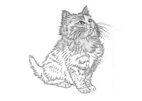 猫的白描作品图片