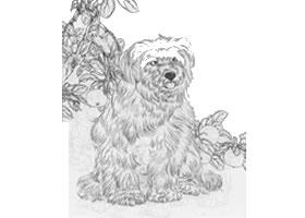 狗的白描作品图片