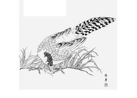 白描锦鸡作品图片