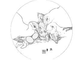 白描孔雀作品图片