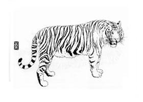 立姿老虎白描作品图片