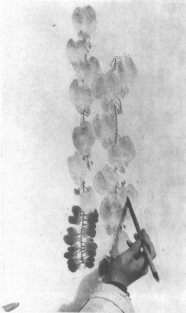 水墨画技法之点水法(藤罗花点水法)02