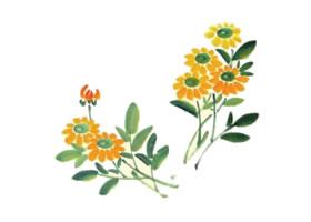 小黄菊儿童水墨画画法