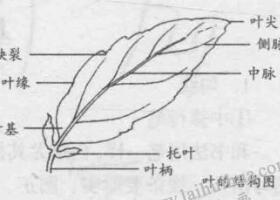 白描花卉的基本笔法