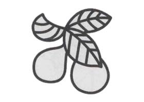 枇杷简笔画画法步骤