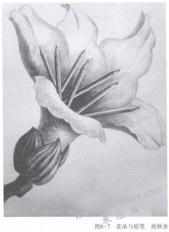 花朵与铅笔,手绘创意素描