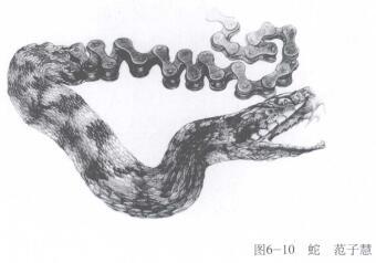 蛇,手绘创意素描