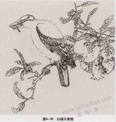 《榴枝黄鸟图》画法,白描示意图