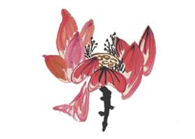荷花花朵的画法(用色勾勒法)