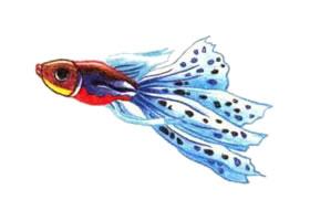 孔雀鱼色铅笔简笔画画法步骤