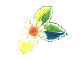 雏菊色铅笔简笔画画法步骤