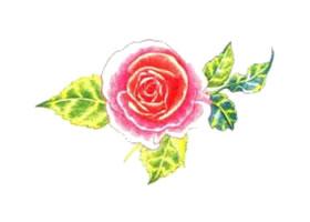 玫瑰花色铅笔简笔画画法步骤