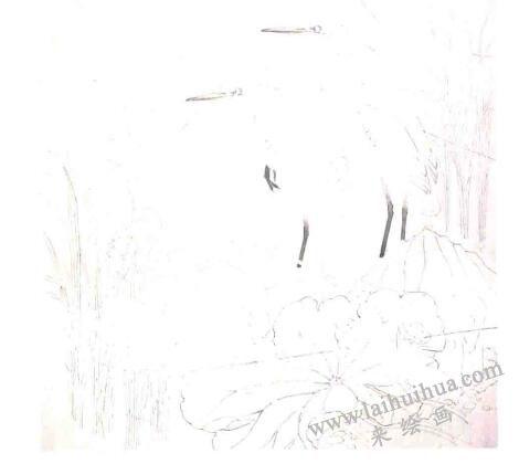 工笔花鸟画《远眺》的画法步骤01