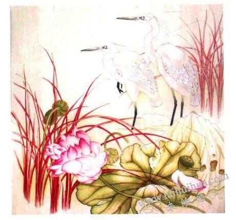 工笔花鸟画《远眺》的画法步骤03
