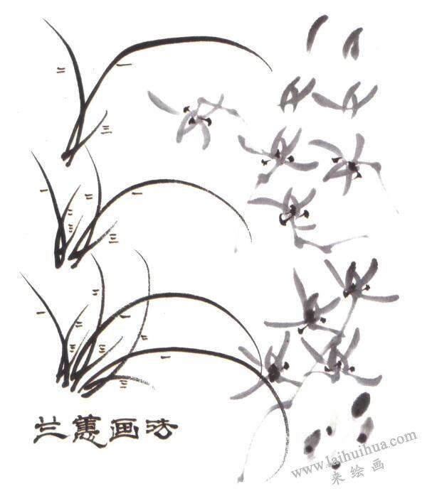 兰蕙的画法(写意花鸟画入门)