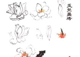 玉兰花的画法