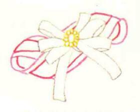 头花的色铅笔简笔画画法步骤01