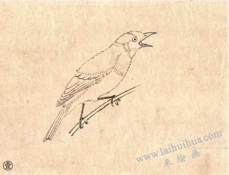 白头翁工笔画法步骤