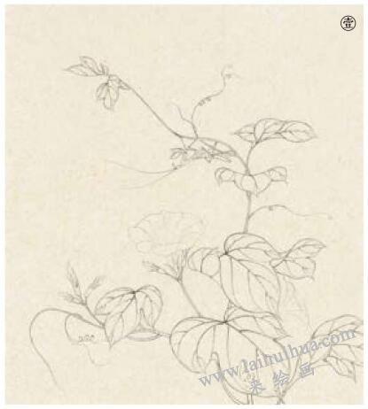 螳螂工笔画法作品范例,步骤1