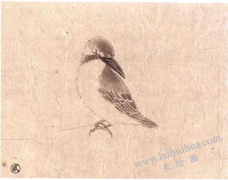 翠鸟工笔画法步骤02