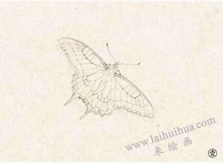 蝴蝶工笔画法步骤01