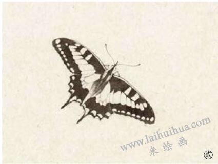 蝴蝶工笔画法步骤02