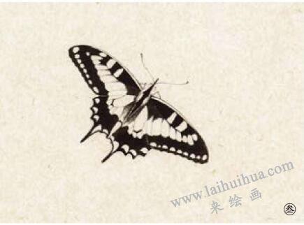 蝴蝶工笔画法步骤03