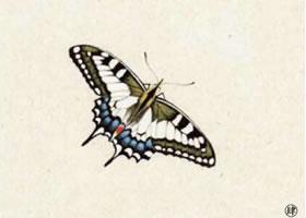 蝴蝶工笔画法步骤