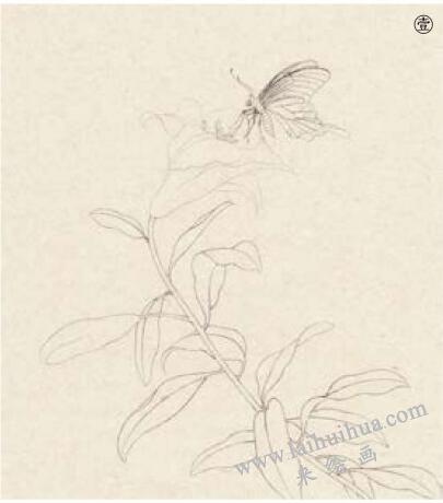蝴蝶工笔画法范例,步骤1