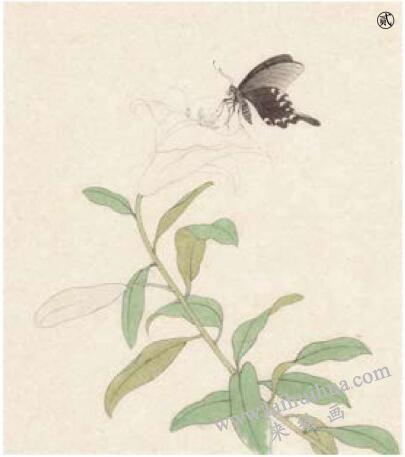 蝴蝶工笔画法范例,步骤2