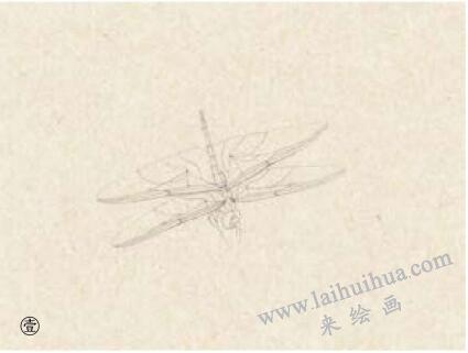蜻蜓工笔画法步骤01