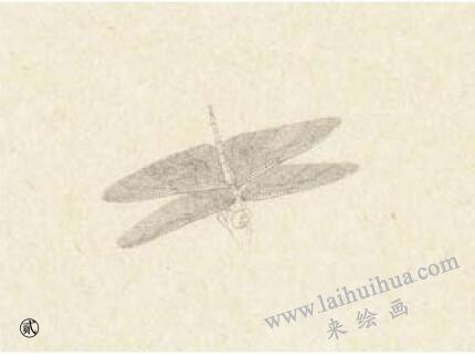 蜻蜓工笔画法步骤02