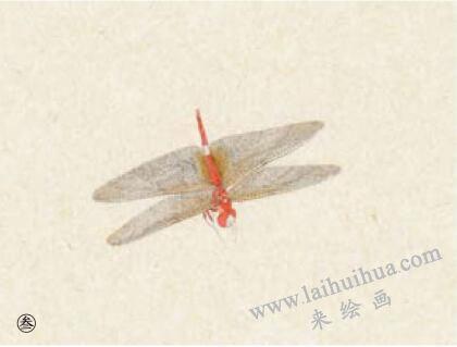 蜻蜓工笔画法步骤03