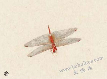 蜻蜓工笔画法步骤04