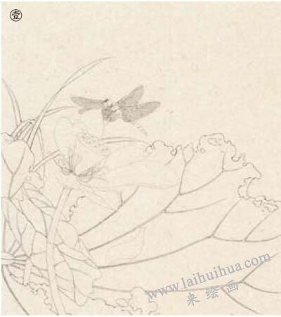 蜻蜓工笔画法作品范例,步骤1