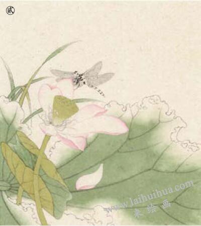 蜻蜓工笔画法作品范例,步骤2