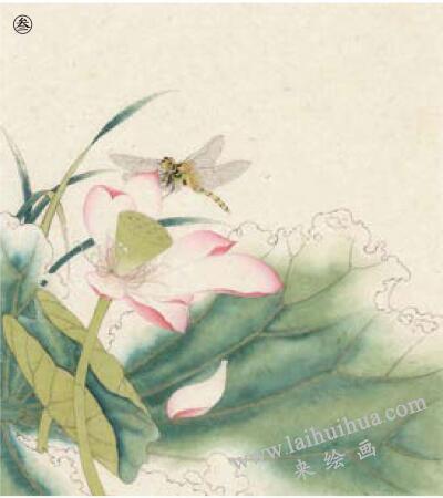 蜻蜓工笔画法作品范例,步骤3