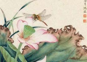 蜻蜓工笔画法作品范例