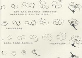 梅花花朵的画法(勾勒法)