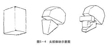 头部体块示意图