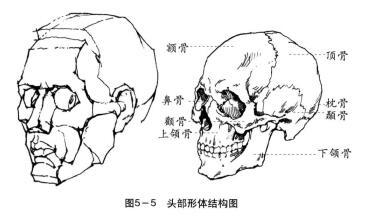 头部形体结构图
