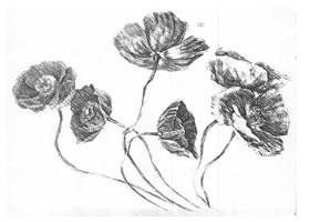花的素描画法范例(一)